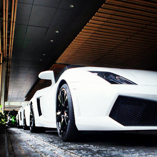 White Lamborghini Gallardo